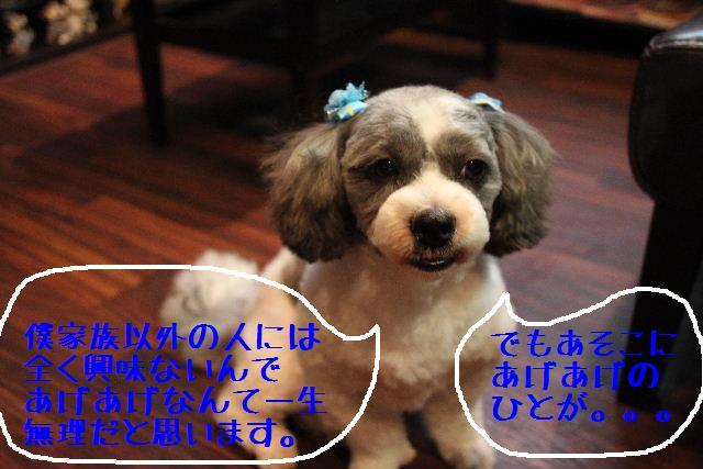 b0130018_9254356.jpg