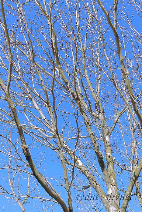 冬枯れに青い空_f0084337_17531026.jpg