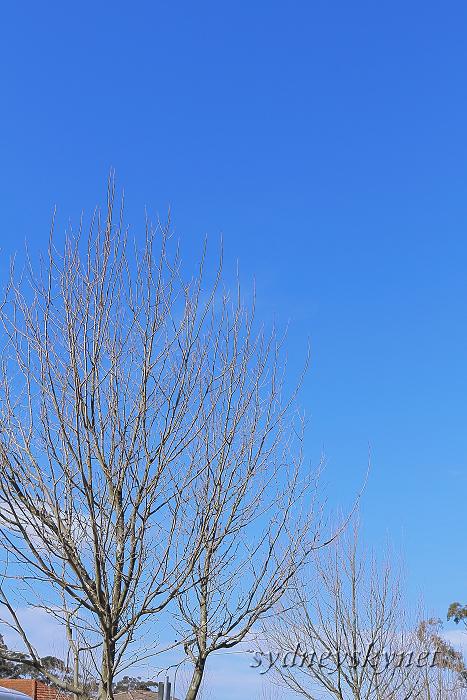 冬枯れに青い空_f0084337_17531847.jpg