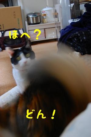 c0181639_0484789.jpg