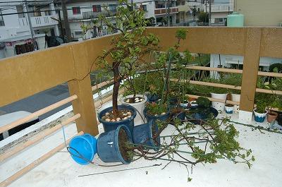 すごかった台風9号!_c0180460_2131037.jpg