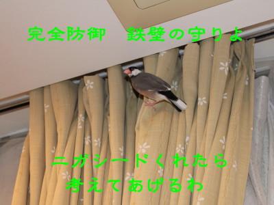 b0158061_2094418.jpg