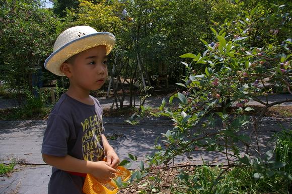 ブルーベリー狩り/ Blueberry picking_a0186568_16511141.jpg