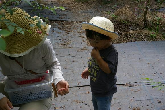 ブルーベリー狩り/ Blueberry picking_a0186568_16535385.jpg