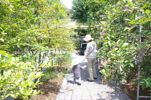 ブルーベリー狩り/ Blueberry picking_a0186568_16543761.jpg