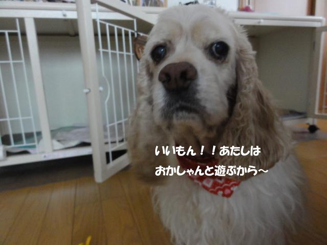f0218182_2255507.jpg