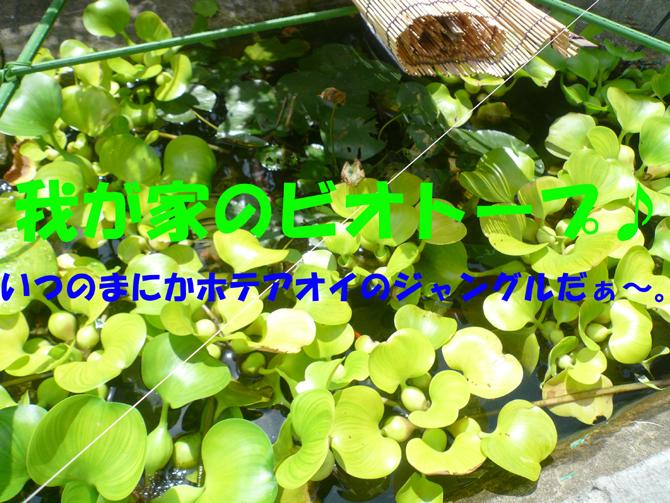 f0183484_23321578.jpg