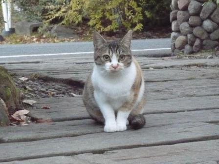 カエルという名の猫_d0248399_2102446.jpg