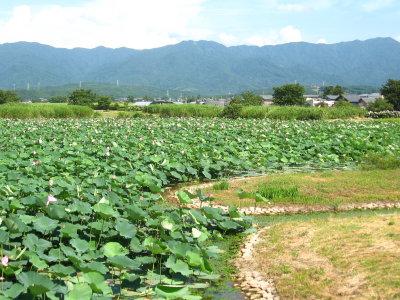 ゆるキャライベント&瓢湖の蓮_f0182936_125969.jpg