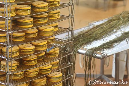 チーズ工場見学 ノルマンディー旅行_c0024345_2172214.jpg