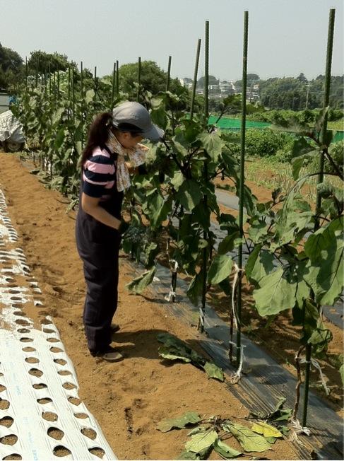 ナス達の生育環境・・風通しをよくして・・・_c0222448_12594040.jpg
