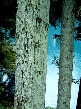 020見聞録20021001 蒼き湖と苔と深き森の神話_f0191870_20411026.jpg
