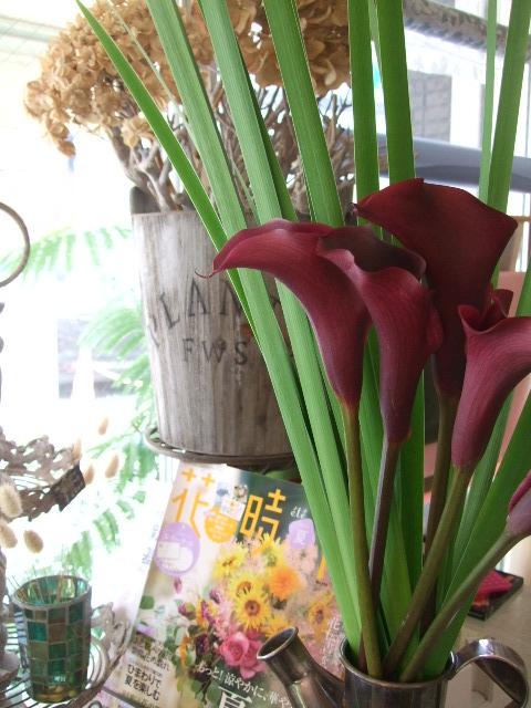 オークリーフ(アップルミントの白い花)_f0049672_15144949.jpg
