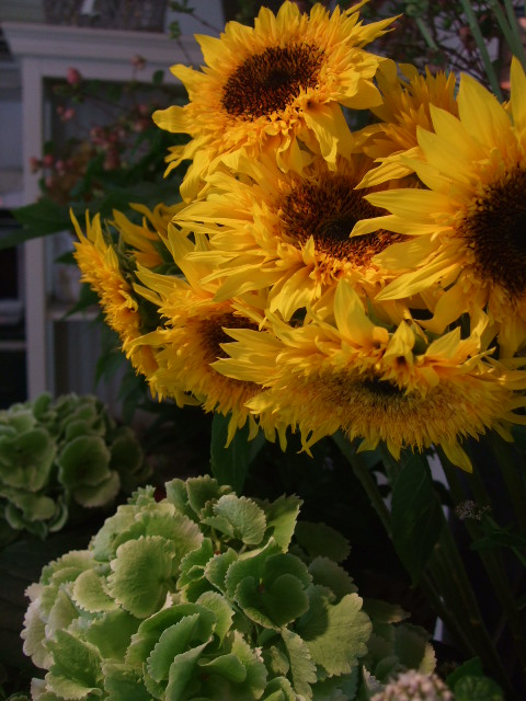 オークリーフ(アップルミントの白い花)_f0049672_156140.jpg