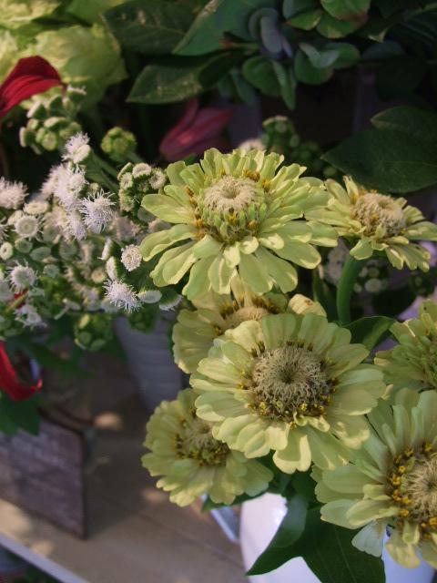 オークリーフ(アップルミントの白い花)_f0049672_156614.jpg
