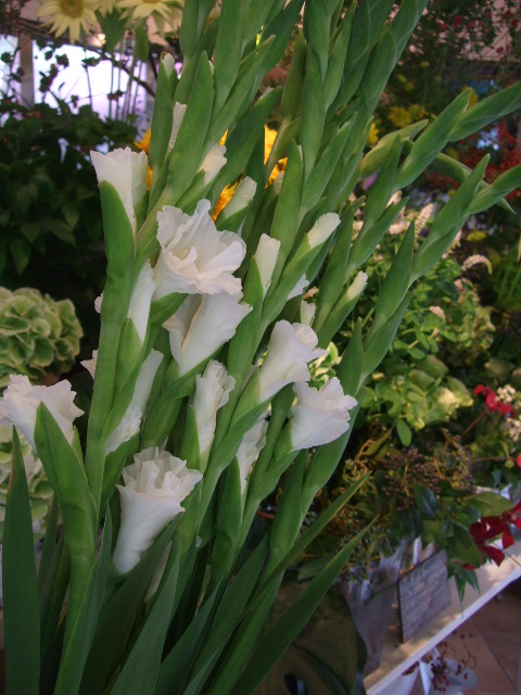オークリーフ(アップルミントの白い花)_f0049672_1585618.jpg
