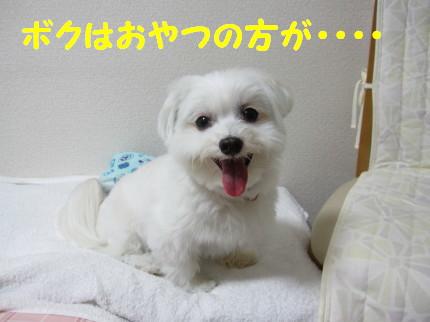 b0193480_16465691.jpg