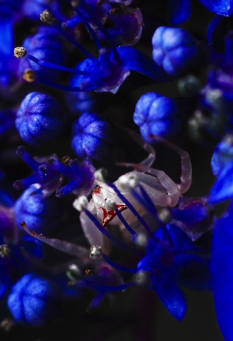 夏にはこんな青が・・・_c0124795_15253135.jpg