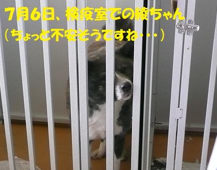 f0121712_1521956.jpg