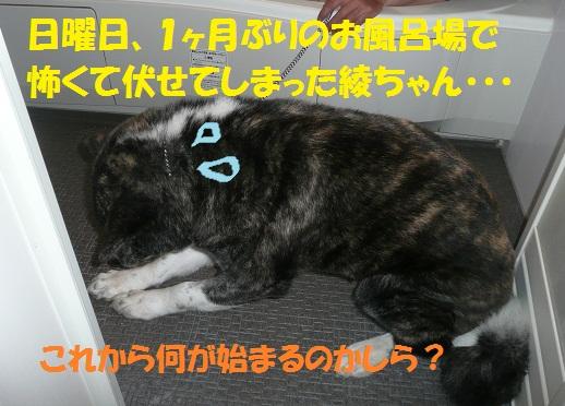 f0121712_15542759.jpg