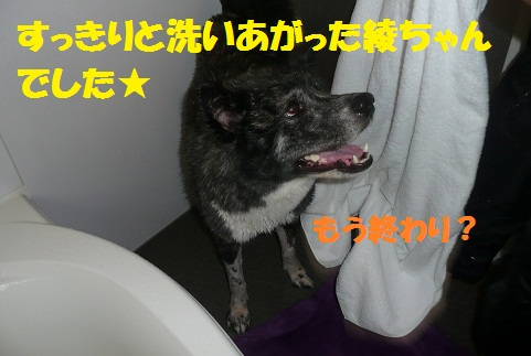f0121712_15571625.jpg