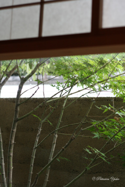 引き算の美学 ~懐石「松川」~_c0138180_2247280.jpg