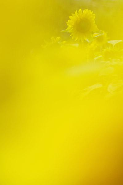 b0103798_1341730.jpg