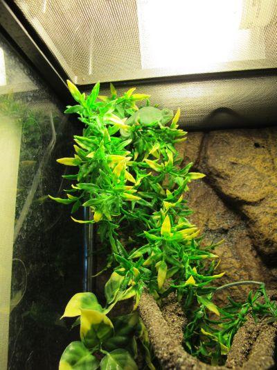 現在展示している爬虫類その1_a0193105_23204170.jpg