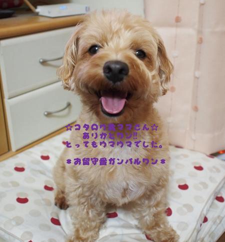 b0199912_051451.jpg