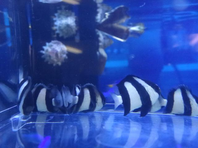 海水魚・水草・淡水魚_f0189122_13133822.jpg