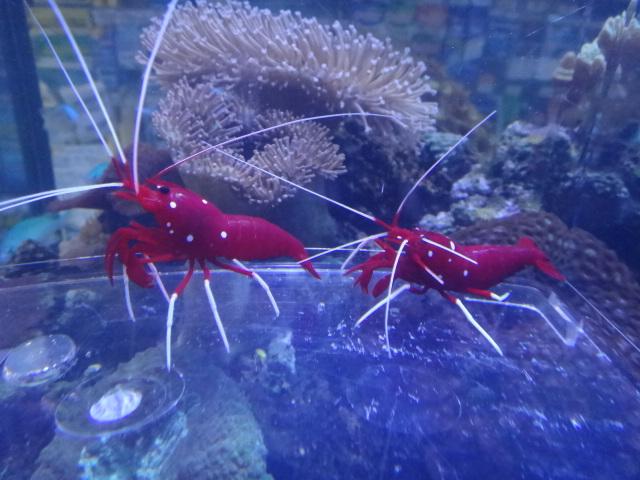 海水魚・水草・淡水魚_f0189122_13173651.jpg