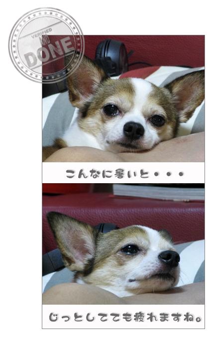 b0177946_1961577.jpg