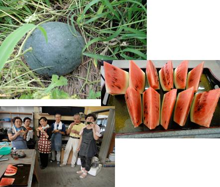 陶芸教室の菜園_e0109554_2122460.jpg