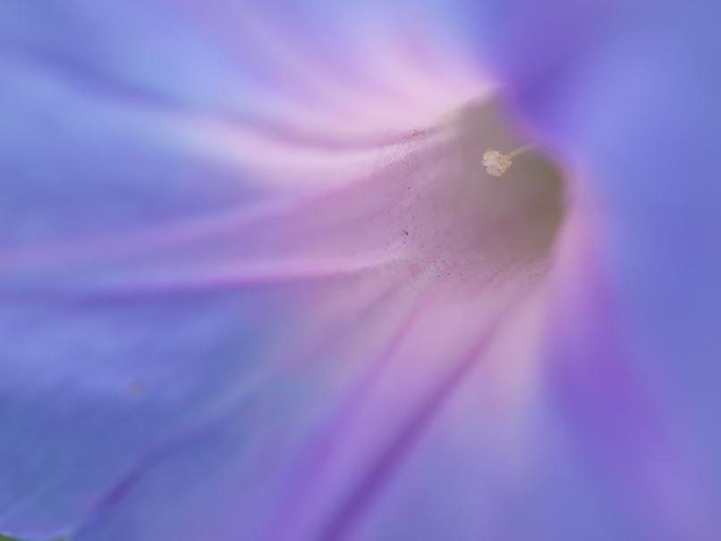 夏の花といえば他に・・・_a0100959_22112029.jpg