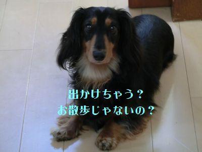b0222559_20101241.jpg