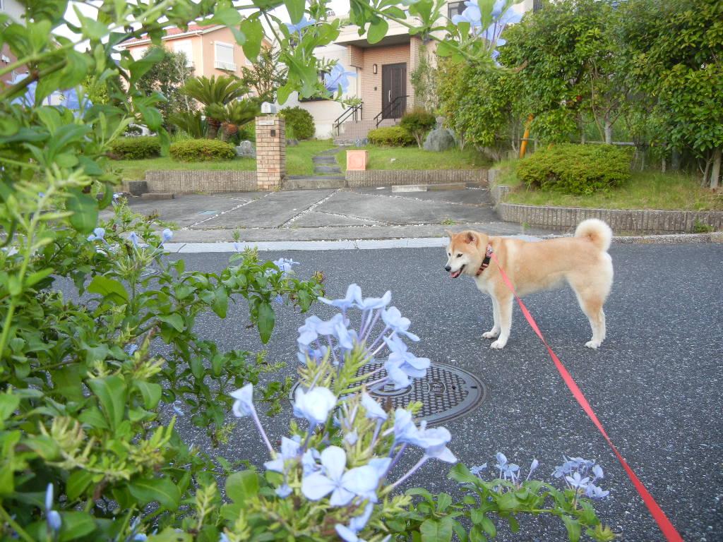 2011年8月10日(水)今日も真夏日だけど節電!_f0060461_939882.jpg