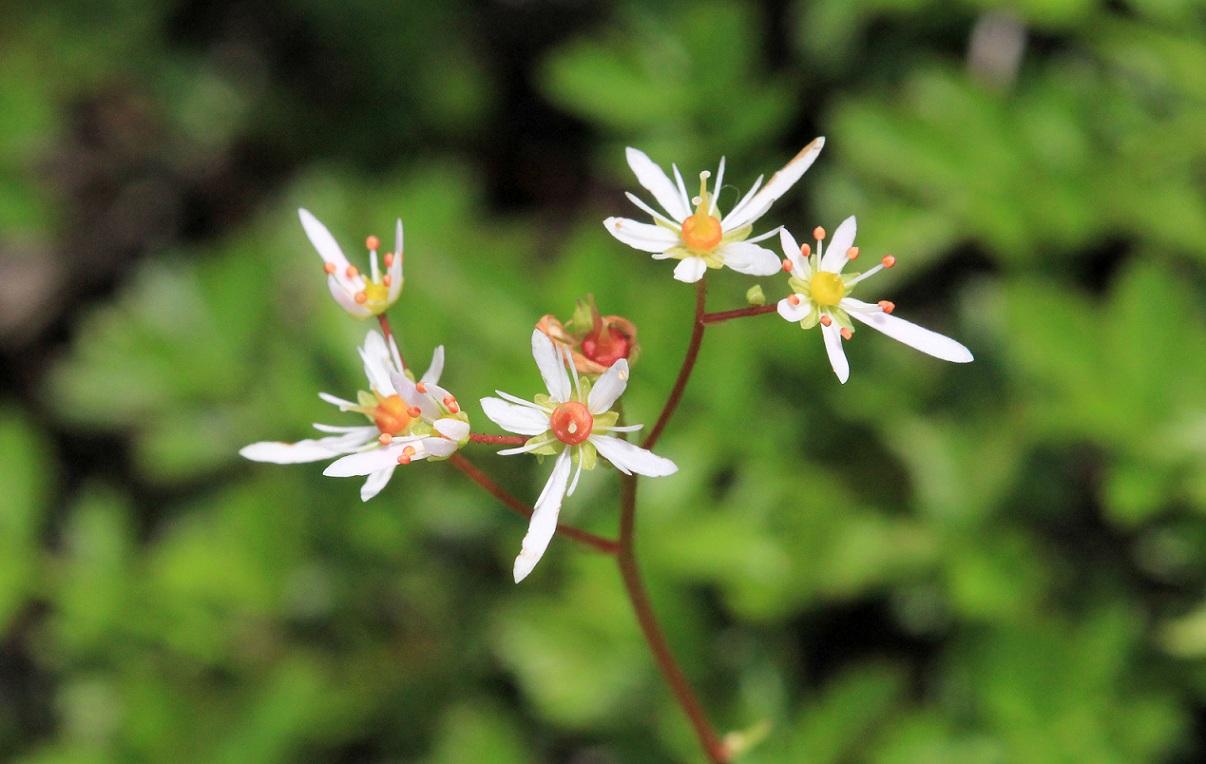 高山植物、標高2450m、白い花、で検索します   ~室堂~_a0107574_19581063.jpg