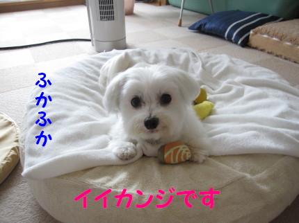 b0193480_1531143.jpg