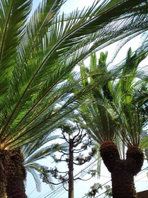 2011年盛夏。暑中お見舞い申し上げます。…グランパの庭より。_b0032617_14361032.jpg