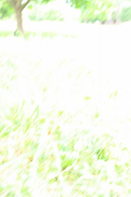 d0147321_13433167.jpg