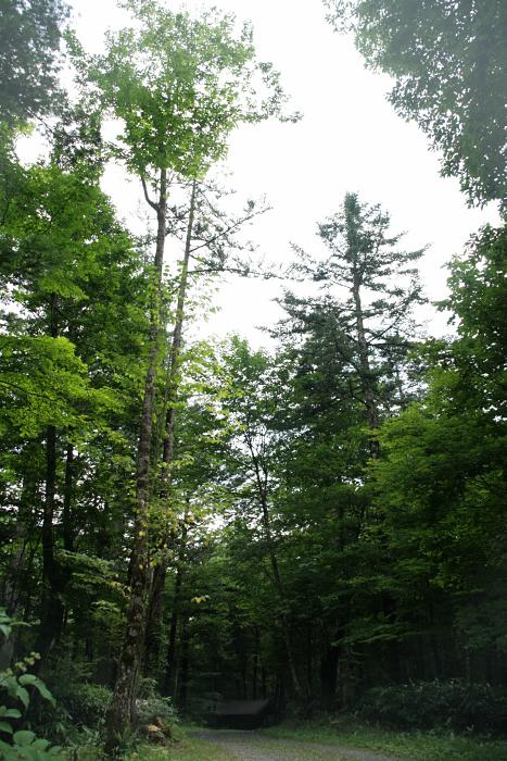 """キャンプ2011 再びあの""""森""""へ・・・『自然に囲まれて』_c0120834_11301468.jpg"""