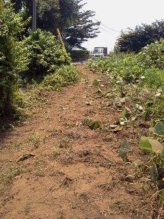 畑までの通路・・・葛蔓で覆われました・・_c0222448_12324564.jpg