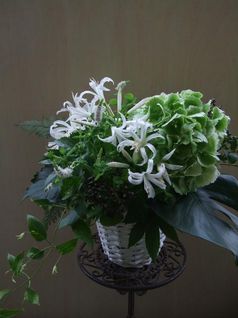 オークリーフ(紫陽花とネリネとミントの花のアレンジメント)_f0049672_14362372.jpg