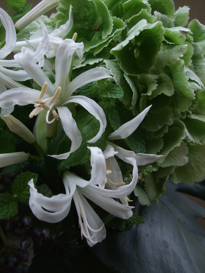 オークリーフ(紫陽花とネリネとミントの花のアレンジメント)_f0049672_14364490.jpg