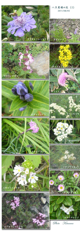 栂池自然園と八方尾根へ(2)_c0051105_16555382.jpg