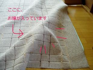 b0200310_5441561.jpg