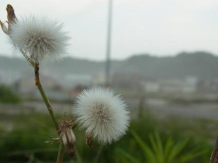 北海道知事高橋はるみさんと女優鈴木杏さんを「冷静」にさせたもの_b0206085_19311596.jpg