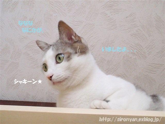 a0159490_16431032.jpg
