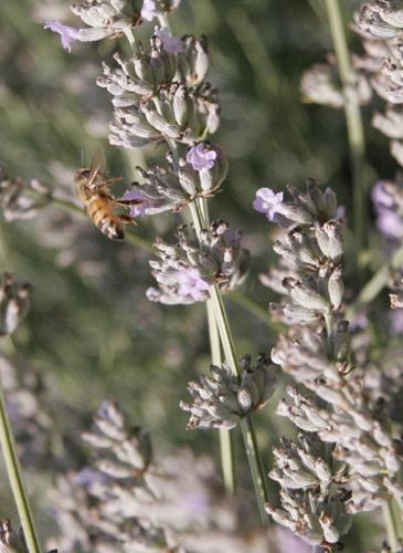 ミツバチと私_f0106597_0144941.jpg