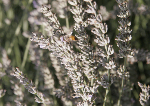 ミツバチと私_f0106597_0152071.jpg
